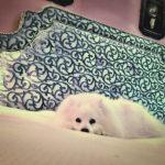 voodipeats designers guild kangaga